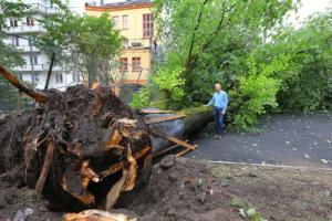 Kartlegger syke trær med satellitt